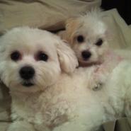 Stanley & Lola