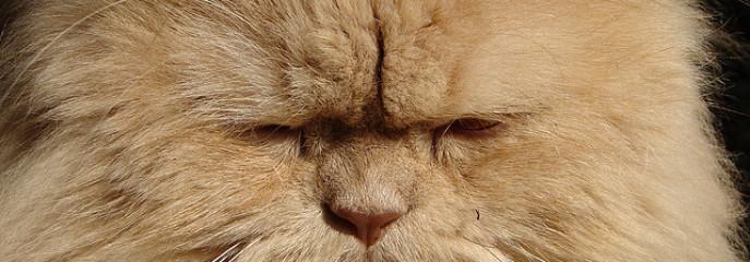 3 Rules for Solving Pet Behavior Problems