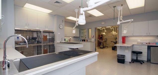 Roscoe Village Animal Hospital   Surgery Suite